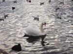 zurich Lago